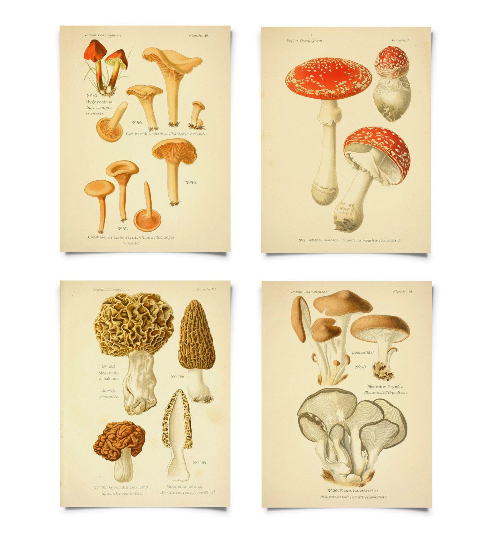 diagram of a mushroom mushroom print set botanical champignons french fungi charts set diagram of a typical mushroom botanical champignons french fungi