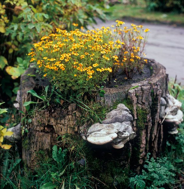 Homeowners and gardeners often spend lots of money removing tree stumps, but there is a better way! With a bit of diligent wood-working, homeowners around the world have turned tree stumps and logs found in their own yards into beautiful tree stump planters full of blooming flowers! Do you have a repurposed tree stump planter …
