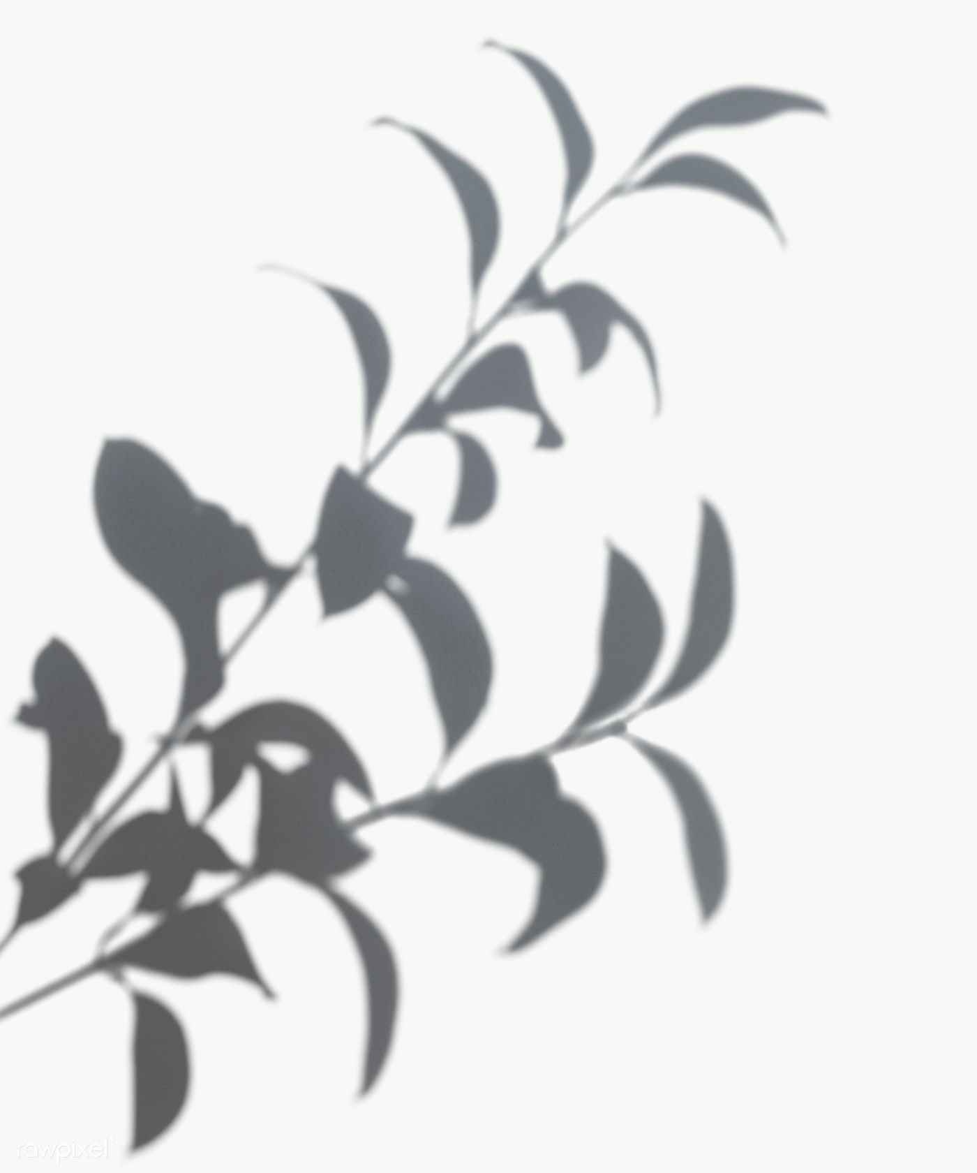 Shadow Of Leaves On A White Wall Free Image By Rawpixel Com Shadow Shadow Photography Shadow Plants