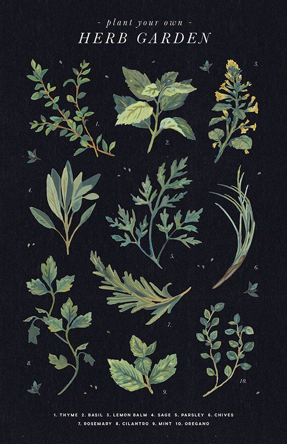 Plant A Herb Garden - Digital Gouache Botanical Floral Poster Print by rasamorrison on Etsy https://www.etsy.com/listing/291401293/plant-a-herb-garden-digital-gouache