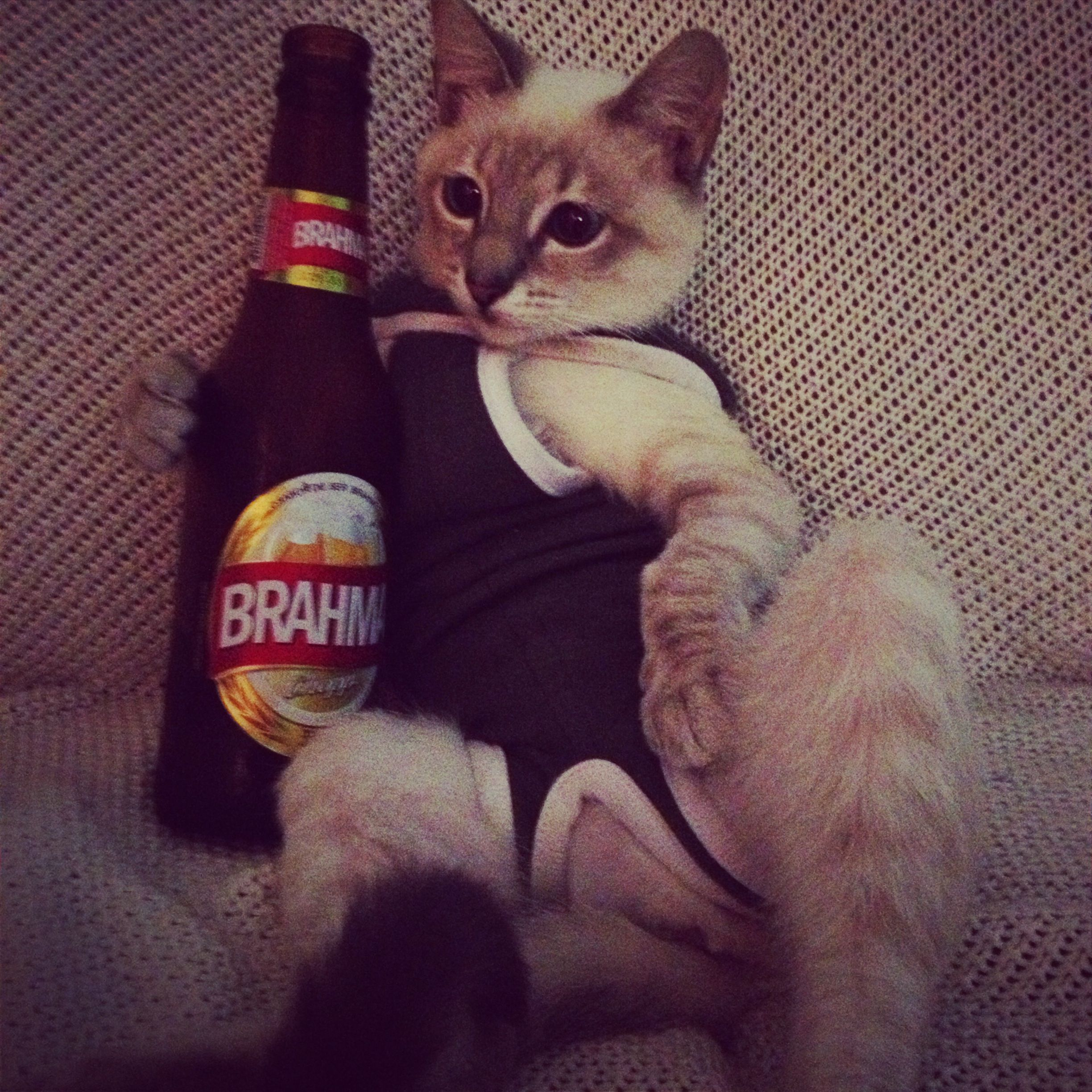 What Could Be Cuter Than Cats And Beer Beer Cat S Beer Bottle