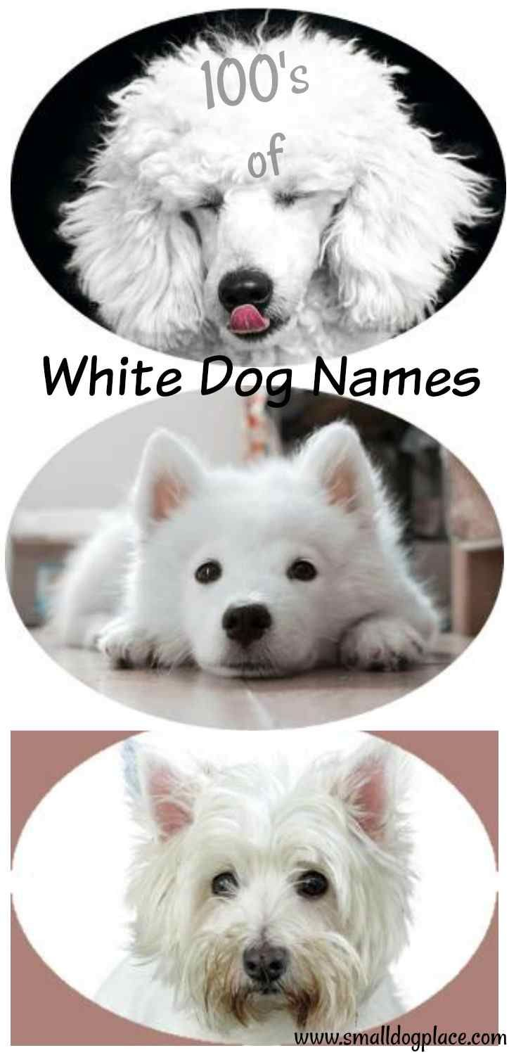 White Dogs Deserve A Pearly White Dog Name Here Are 100s To Choose From Dog Names Cute White Dogs White Dogs