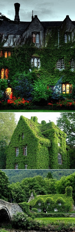 Ivy-Covered Houses... love these!!!