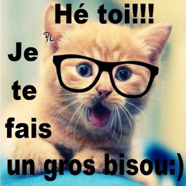 image drole pour dire bonjour | Chat marrant, Gros bisous, Images drôles