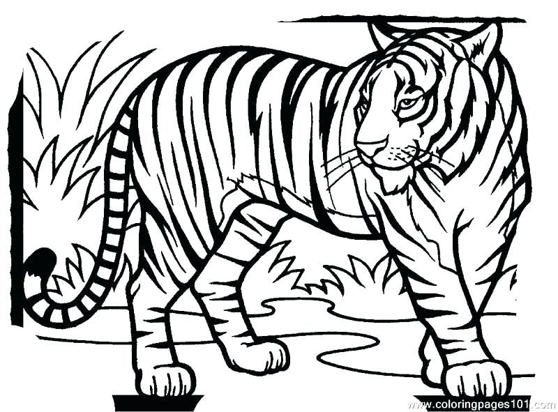 Coloring Pages Tiger Tigers For Preschool Tig On Preschool