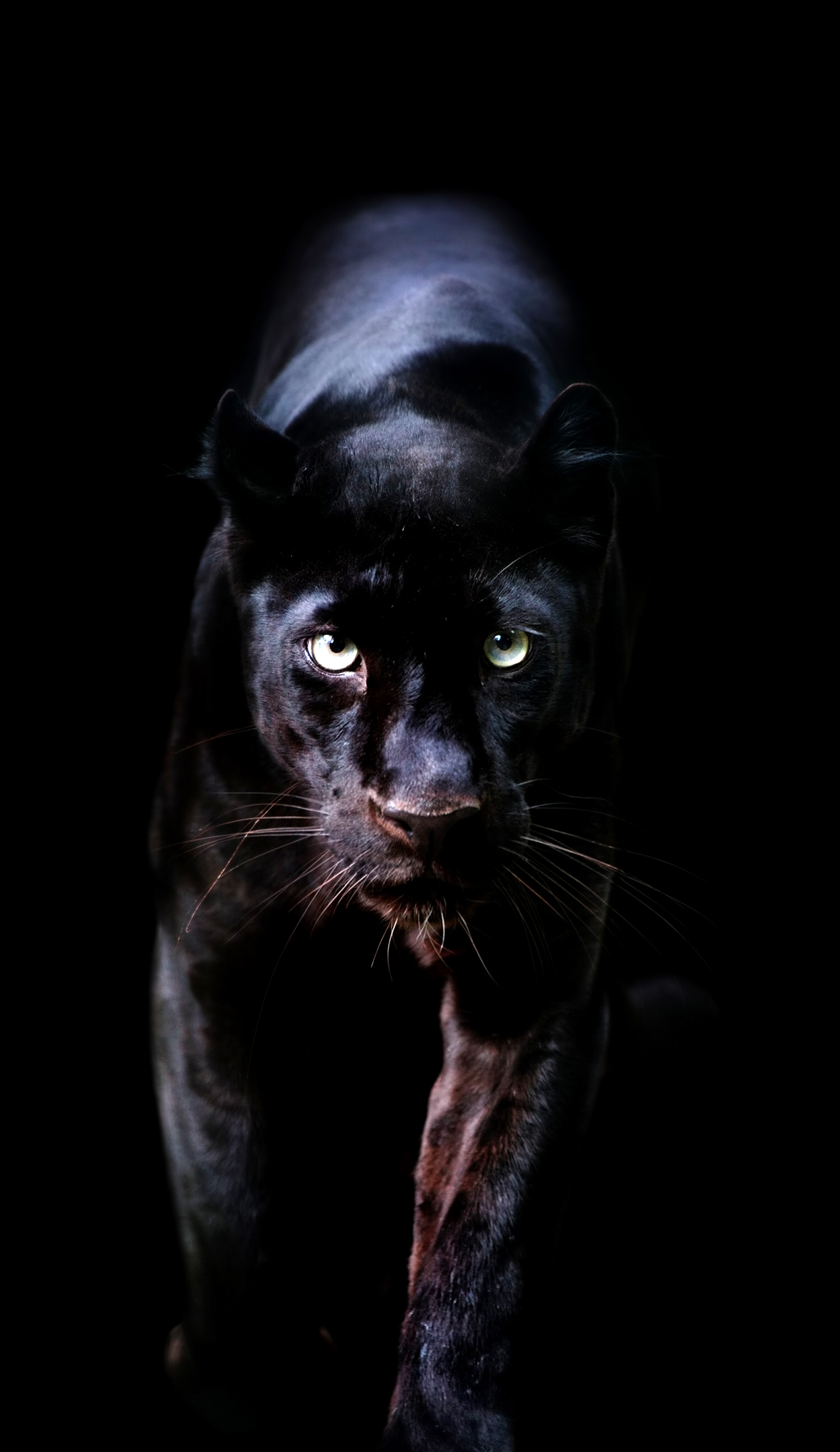 1125x2436 Black Panther Movie 2018 Poster Iphone XS,Iphone