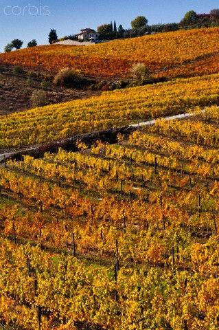 Radda in Chianti, Chianti, Tuscany, Italy -