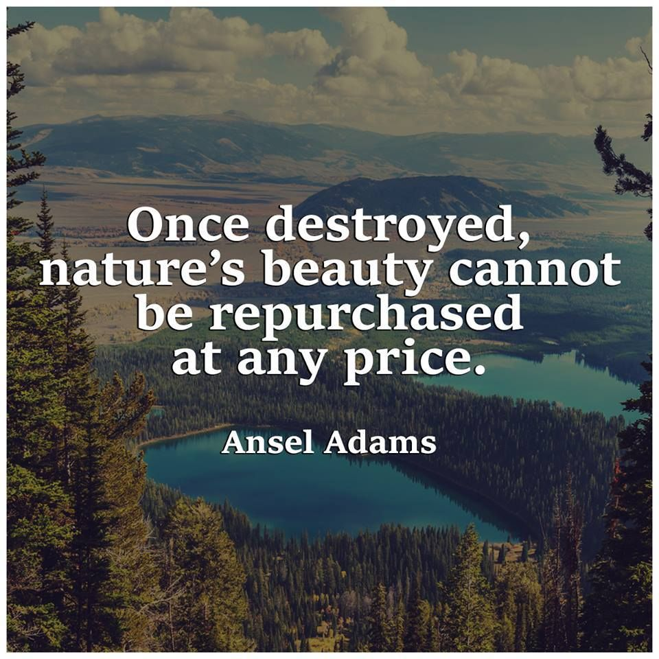 Truth Be Told Nature Quotes Nature Quotes Trees Environmental Quotes