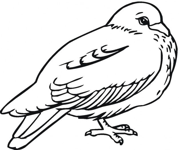 Pigeon 5 Bird Coloring Pages Animal Coloring Pages Coloring Pages