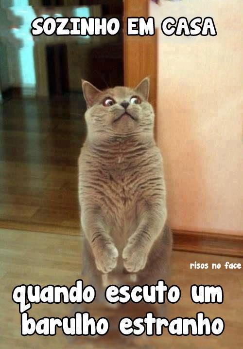 Imagens Engraçadas Para Whatsapp Humor Funny Funny Animals E Humor