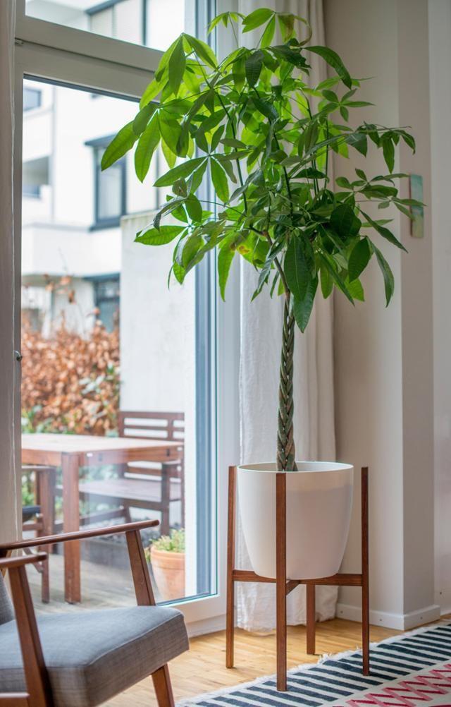 Dieser Pflanzenständer mit Blumentopf ist die Wucht! So setzen wir - pflanzen dekoration wohnzimmer
