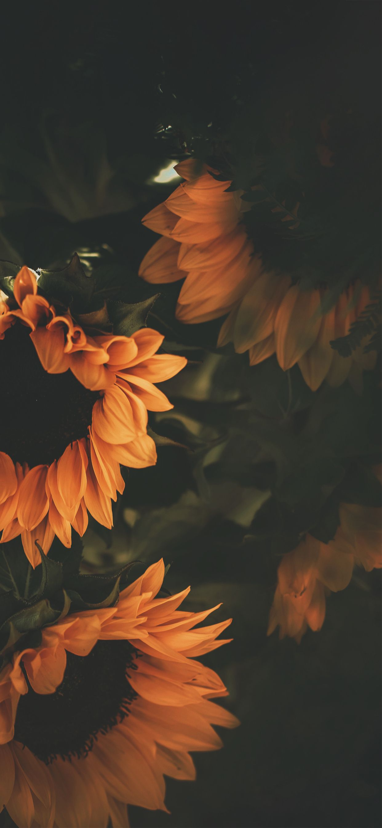 iPhone Xs Max Sunflower wallpaper, Backgrounds phone