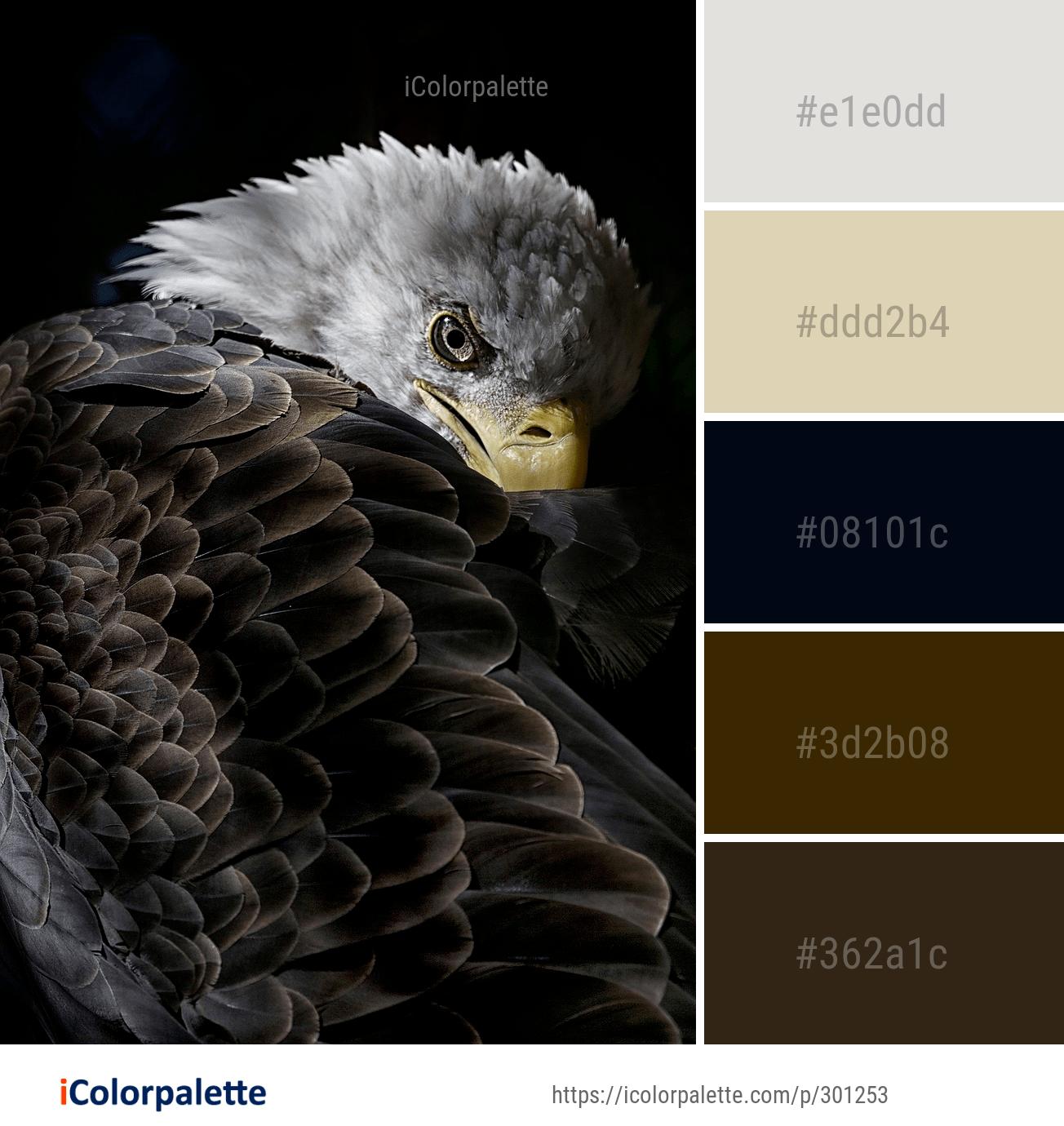 Обои eagle, beak, the, клюв, winter. Животные