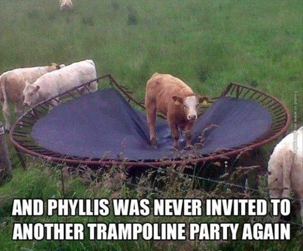 Funny Meme Puns : Funny cow memes plus friday frivolity party funny cows cow