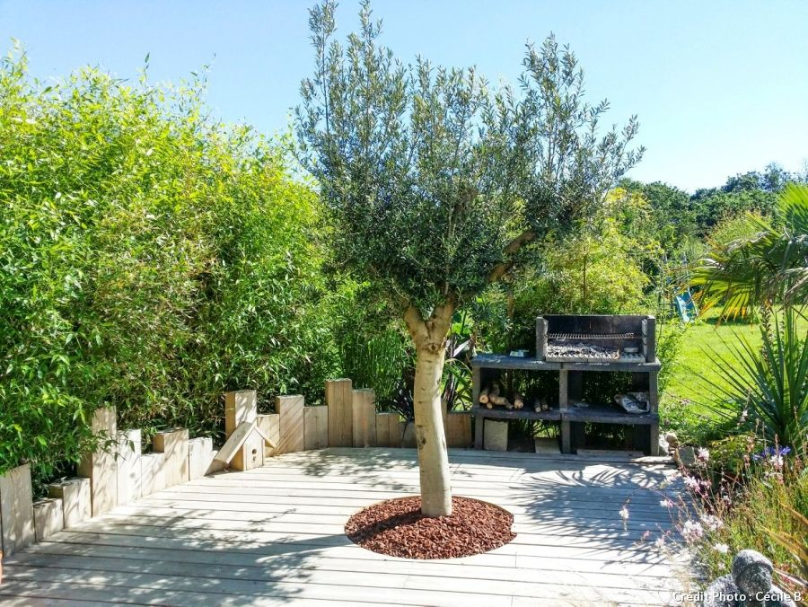Un jardin breton au look exotique | Haie de bambou, La terrasse et ...