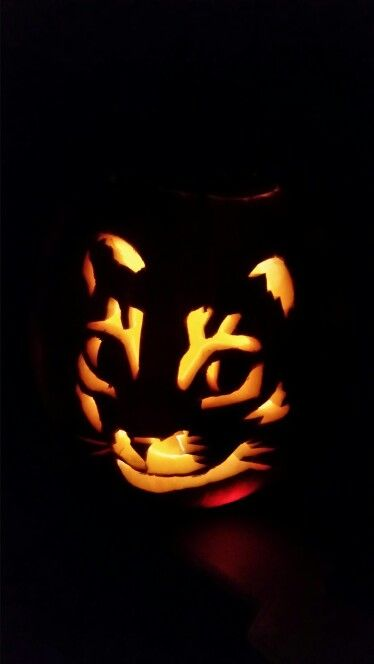 Pompoen En Halloween.Poes In Pompoen Halloween Pompoenen Stella Pompoenen