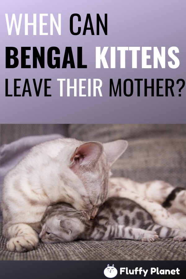 When Can Bengal Kittens Leave Their Mother? [ 2020