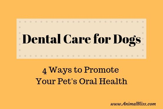Dental Care for Your Dog: 4 Ways to Promote Your Pet's Oral Health #dentalcare