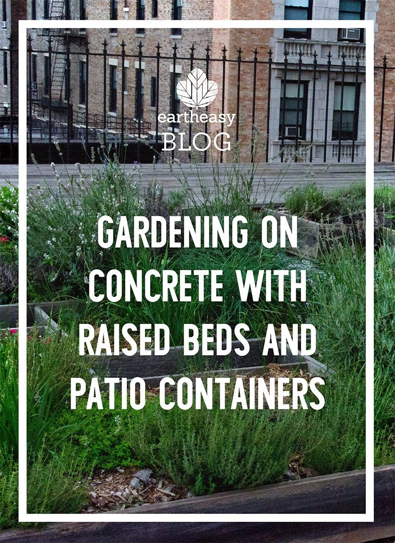 on Concrete With Raised Beds and Patio Containers Gardening on Concrete with Raised Beds and Patio ContainersGardening on Concrete with Raised Beds and Patio Containers