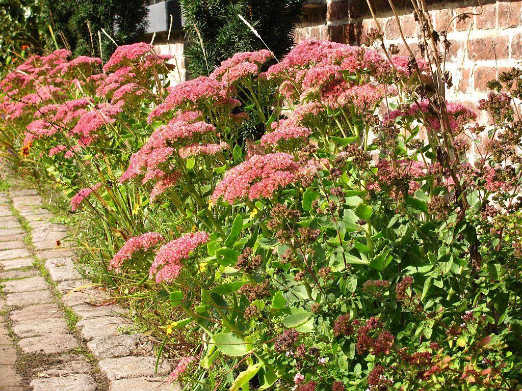 Home garden design flower  Great Inexpensive Ideas For Creating Your Perfect Garden  Modern