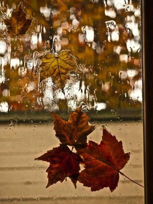 Pioggia..