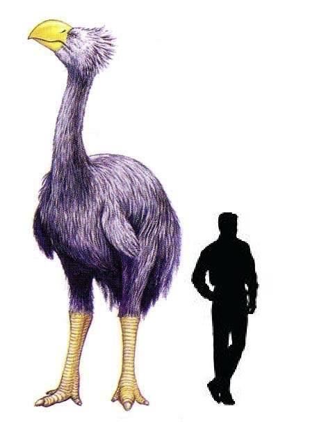 Guía del mundo prehistórico: Mioceno | danny likes ... - photo#27