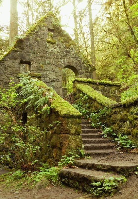 Portland, Oregon Forest park portland, Forest park