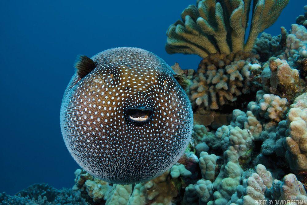 Pin On Cool Marine Life