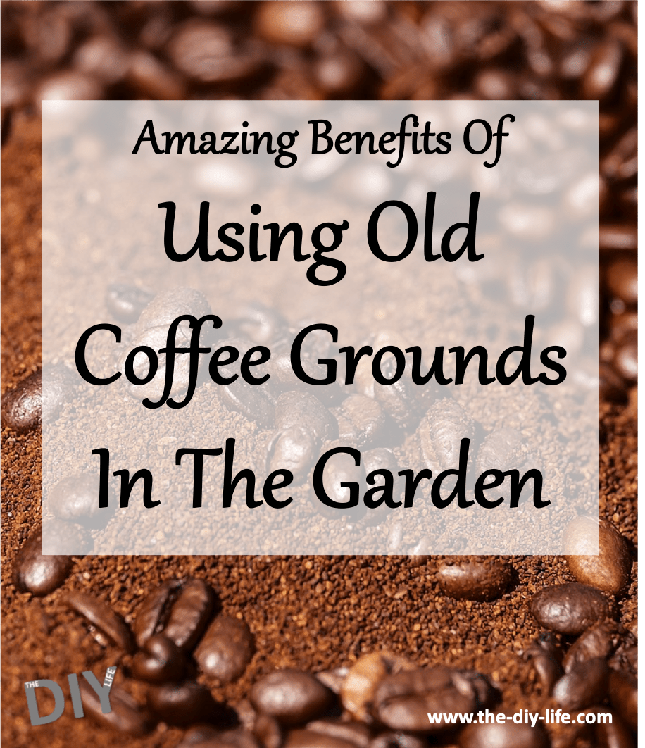 Use Old Coffee Grounds In The Garden The Diy Life Coffee Grounds Coffee Uses For Coffee Grounds
