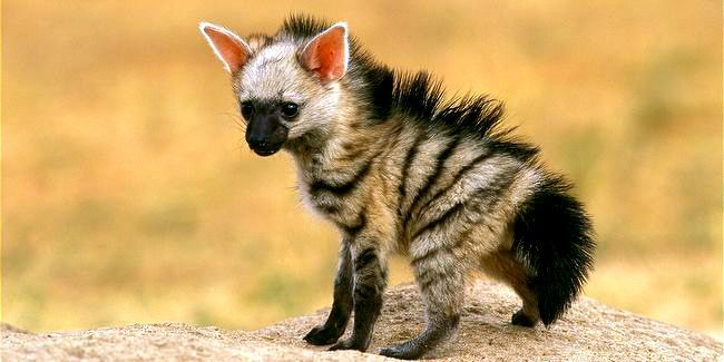 I chose this picture because the hyena in life of pi was for Life of pi animals