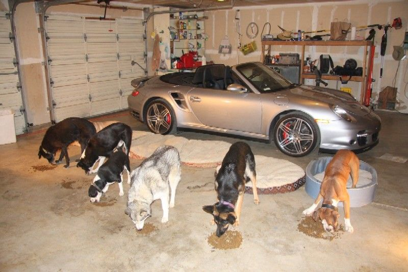 Dog Training Sacramento Dogs Dog Training Service Dogs