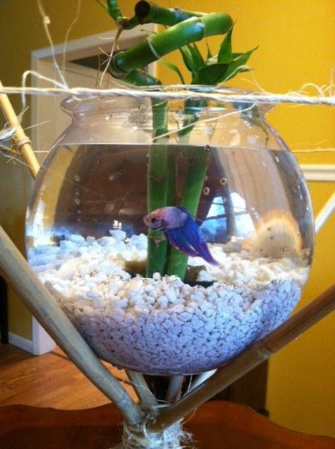 Beta fish centerpiece on a bamboo stand simple easy to
