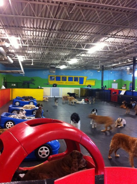 I want a doggie day care/ grooming area / kennel so u can