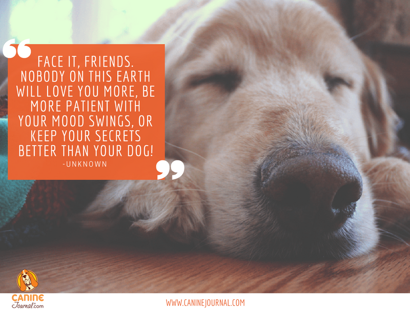 Why Dogs Are Truly Man S Best Friend Dog Quotes Famous Dogs Dogs