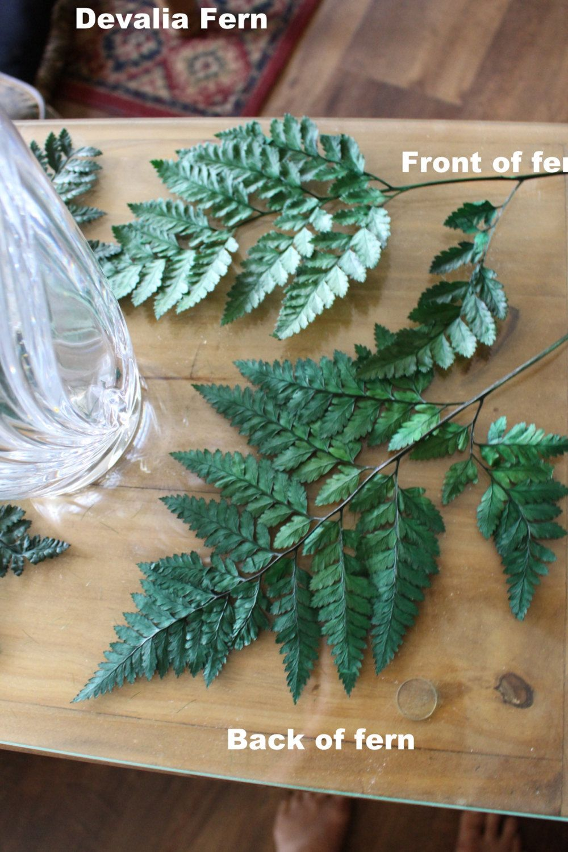 Preserved Tree Fern in Green 30 Tall 10 Stem Bundle