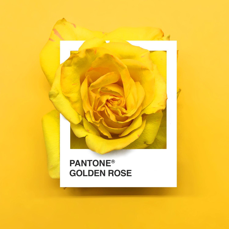 Pantone Flower, Yellow Pantone, Pantone