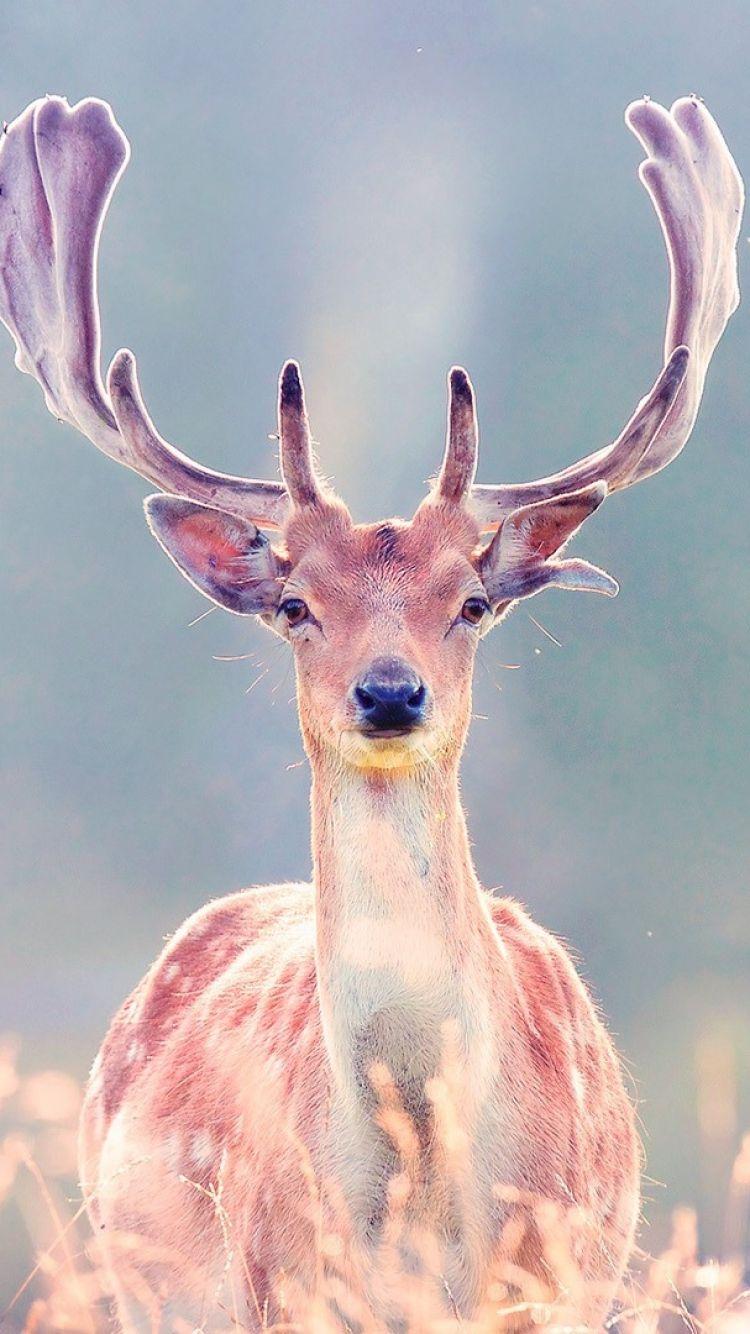 deer wallpaper iphone 6 Google Search Fondos De