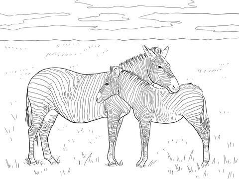 Grant S Plain Zebras Coloring Page Zebra Coloring Pages Animal