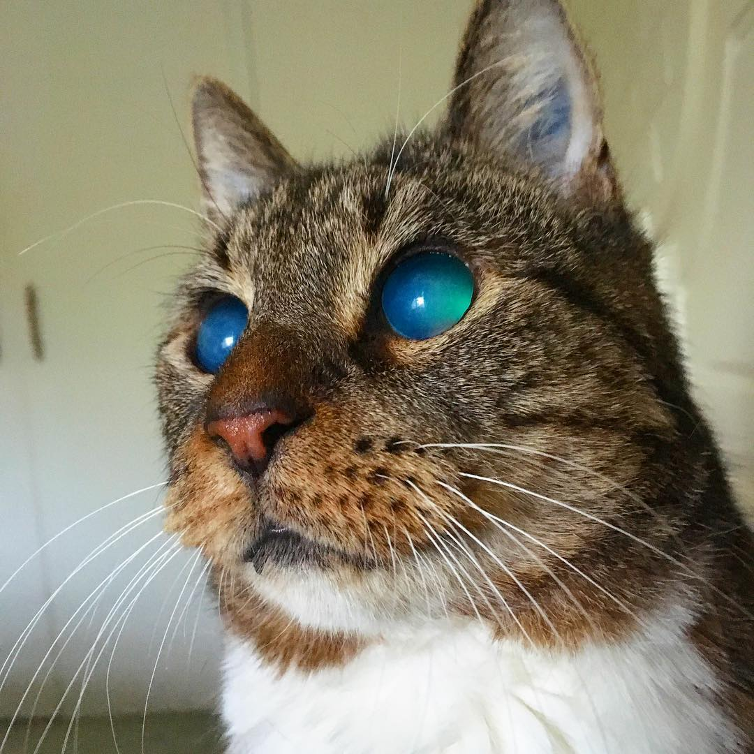 Meet The Stunning Blind Senior Cat Who Was Rescued From A