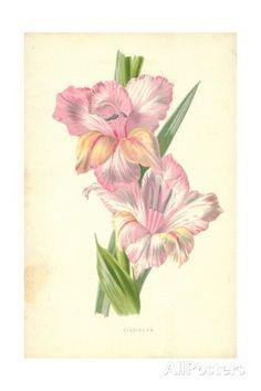 7b1839615484b Pinterest | Gladiolus Flower August Birth Flowers and Poppies Tattoo ...