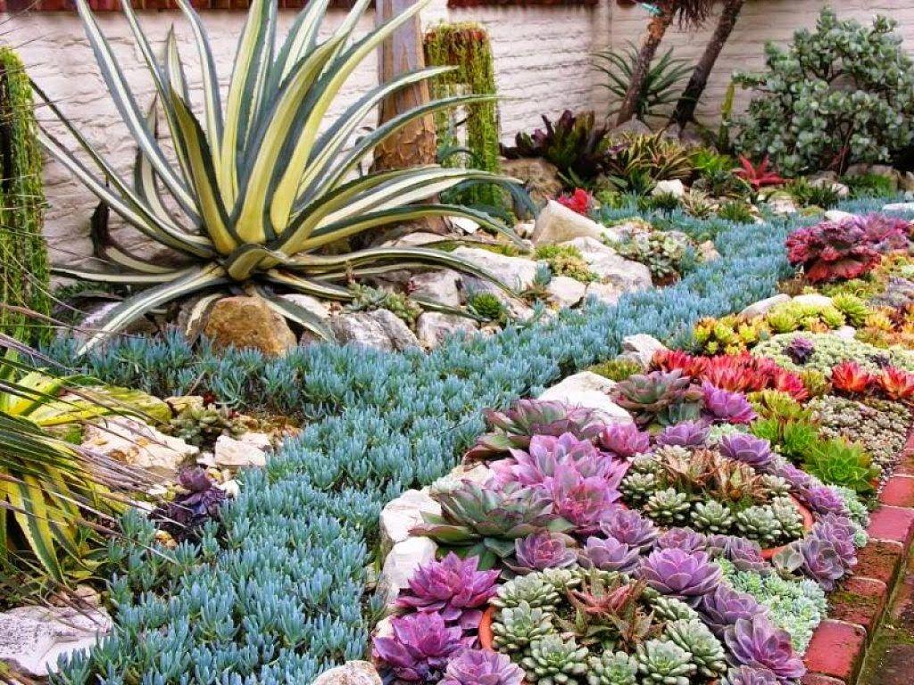 20 Ideas Para Decorar Un Lindo Jardin Con Suculentas Suculentas Jardin Suculentas Jardines