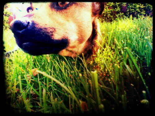 Mr Bean Pets Dog Life Service Animal