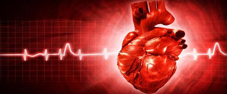 לאכול כל הדרך לתחלואה Heart disease risk factors, Heart