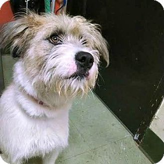 2 19 17 Pensacola Fl Otterhound Mix Meet Eliza A Dog For