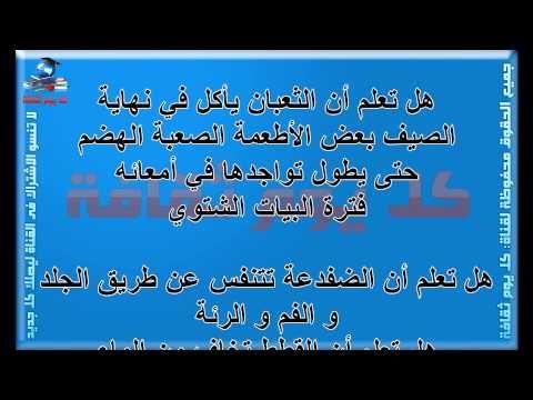 غريب جدا هل تعلم هل تعلم عن الحيوانات معلومات عن الحيوانات Arabic Calligraphy Calligraphy