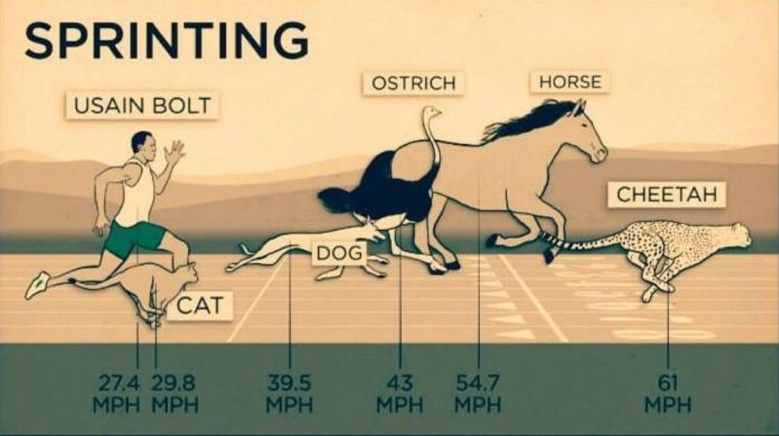 Speed. www.jekyllhydeapparel.com   Horses, Cat memes, Cat ...