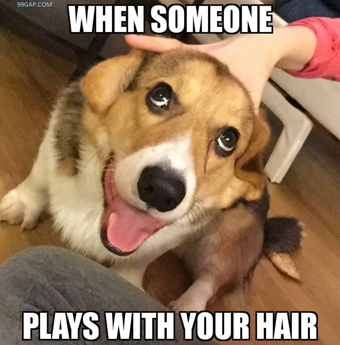Funny Meme Of The Day ft. Funny Dog dogsfunnymeme