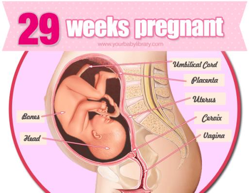 27–29 weeks pregnant