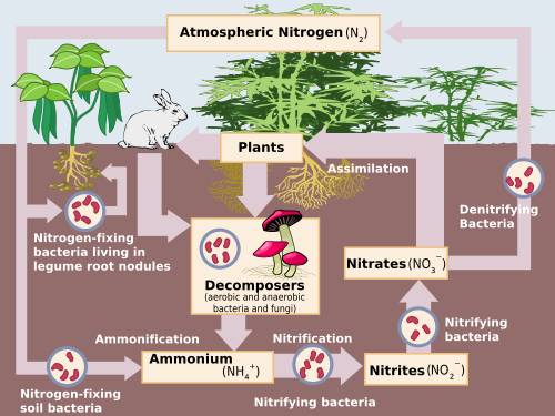 High School Earth Science The Carbon Cycle Wikibooks open books