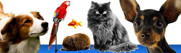 List Of Grants For Animal Programs Pets Spirit Animal Pet Store